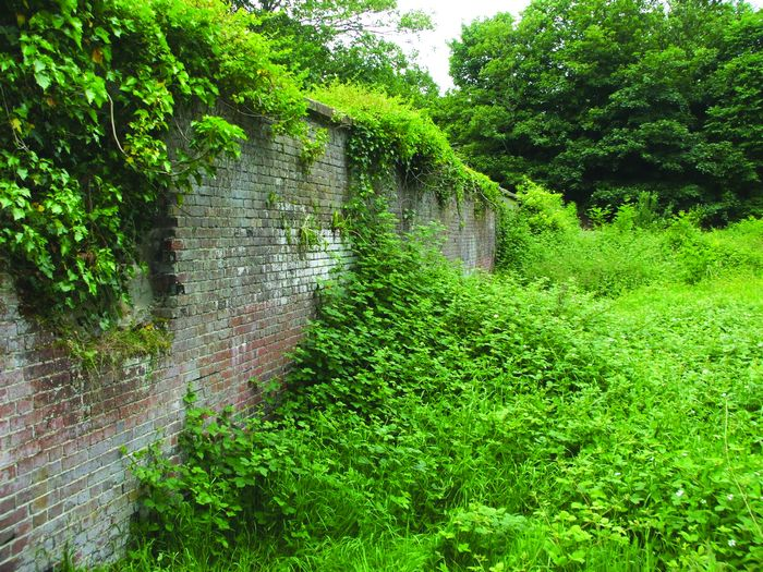 Overgrown boundary of the Walled Garden; note hole in wall. Inset: large part of wall missing [photos: Bob Hart]