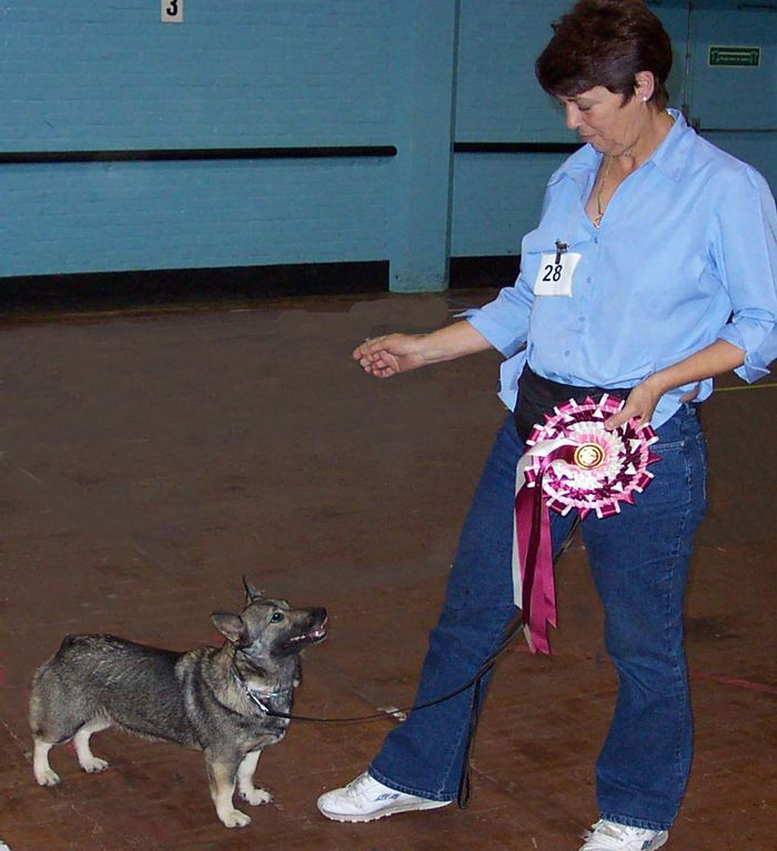 Best in Show - Carla May with Vallhund Dixie.