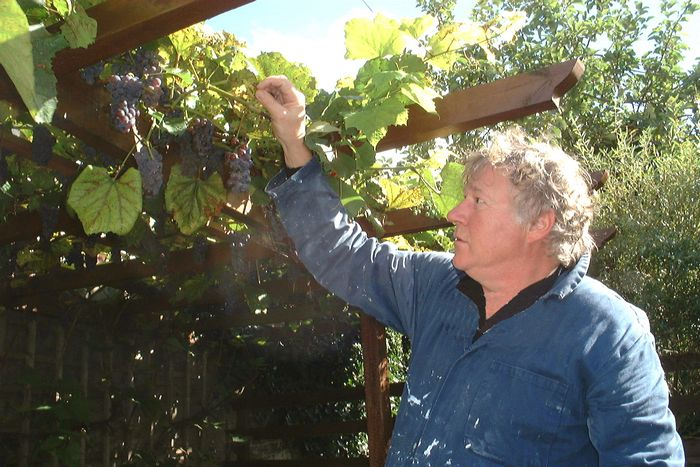 Bill Third and his prized grapes.