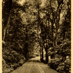 Summerfields - drive or lane in school grounds