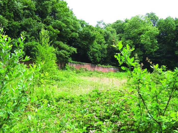 Inside the walled garden  completely overgrown with young oak trees establishing themselves